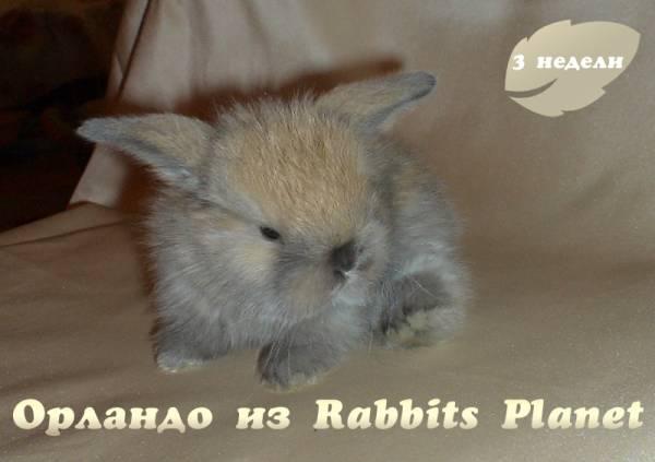 http://rabbits.ucoz.com/_ph/2/2/115287989.jpg
