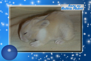 http://rabbits.ucoz.com/_ph/2/2/133489199.jpg