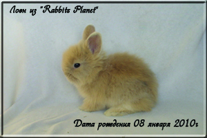 Лоэн из Rabbits Planet