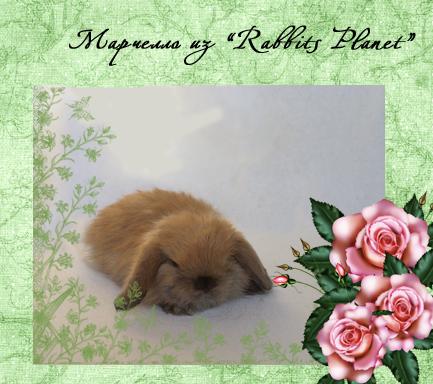 http://rabbits.ucoz.com/_ph/2/2/201419096.jpg