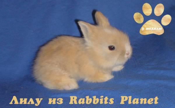 http://rabbits.ucoz.com/_ph/2/2/203751427.jpg