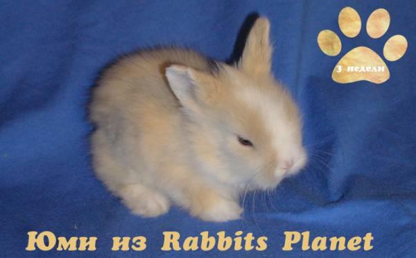 http://rabbits.ucoz.com/_ph/2/2/257423182.jpg