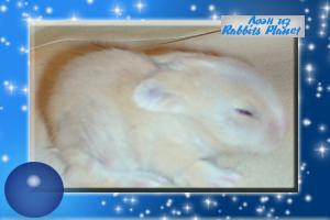 http://rabbits.ucoz.com/_ph/2/2/310142819.jpg
