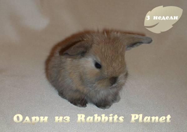 http://rabbits.ucoz.com/_ph/2/2/325819860.jpg