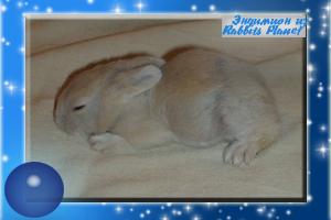 http://rabbits.ucoz.com/_ph/2/2/328230850.jpg