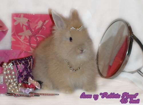 http://rabbits.ucoz.com/_ph/2/2/369765704.jpg