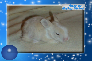 http://rabbits.ucoz.com/_ph/2/2/381168421.jpg