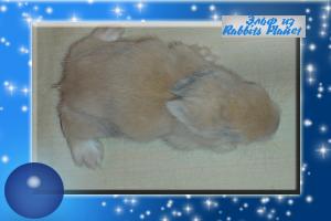 http://rabbits.ucoz.com/_ph/2/2/393178717.jpg