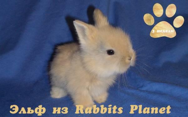 http://rabbits.ucoz.com/_ph/2/2/399138235.jpg