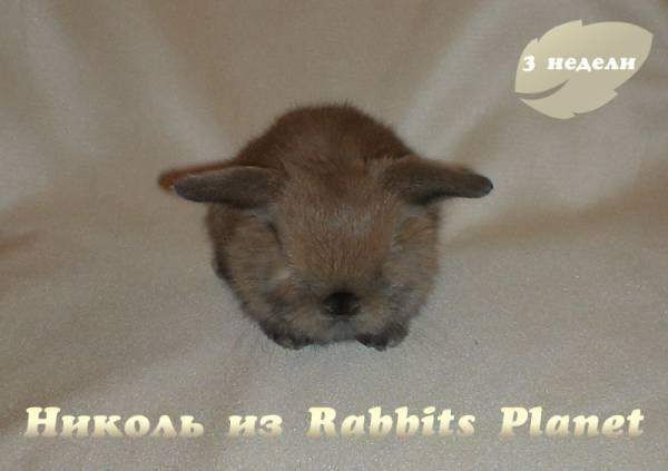 http://rabbits.ucoz.com/_ph/2/2/442103497.jpg