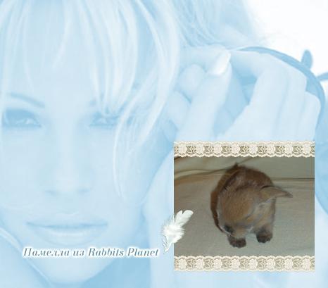 http://rabbits.ucoz.com/_ph/2/2/486792712.jpg