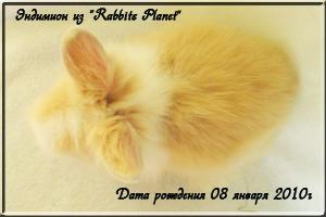 Эндимион из Rabbits Planet