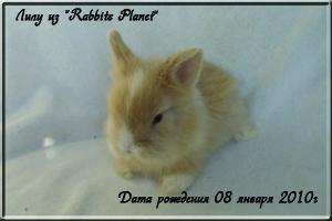 Лилу из Rabbits Planet