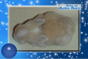 http://rabbits.ucoz.com/_ph/2/2/514853128.jpg