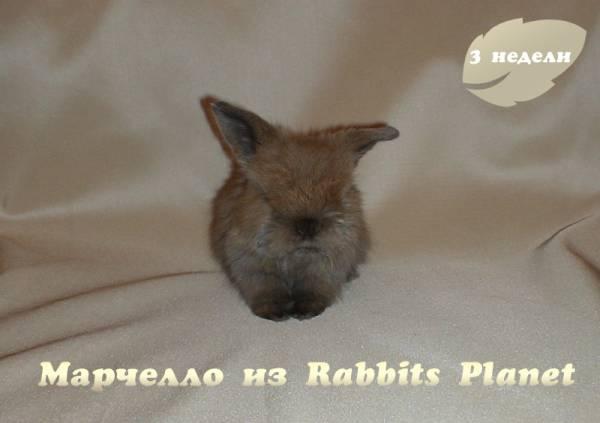 http://rabbits.ucoz.com/_ph/2/2/532524829.jpg