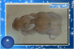 http://rabbits.ucoz.com/_ph/2/2/559415014.jpg
