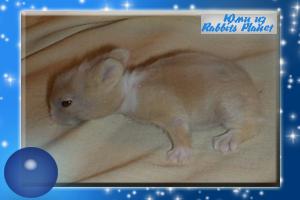 http://rabbits.ucoz.com/_ph/2/2/593049447.jpg