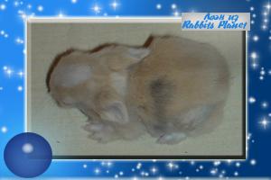 http://rabbits.ucoz.com/_ph/2/2/646744821.jpg