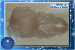 http://rabbits.ucoz.com/_ph/2/2/660734841.jpg