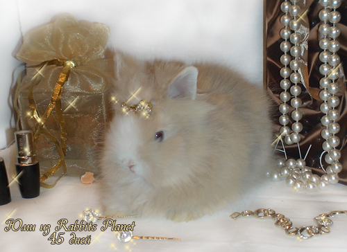 http://rabbits.ucoz.com/_ph/2/2/696012749.jpg