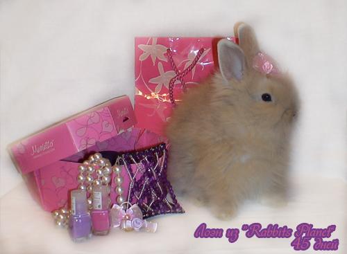 http://rabbits.ucoz.com/_ph/2/2/696104288.jpg