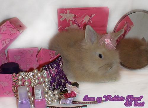 http://rabbits.ucoz.com/_ph/2/2/710427017.jpg