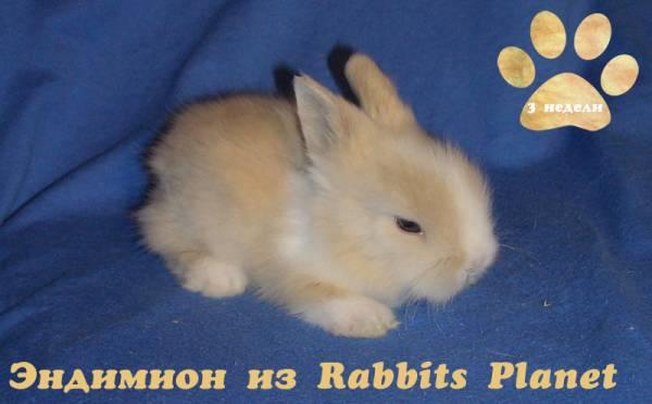 http://rabbits.ucoz.com/_ph/2/2/722998141.jpg
