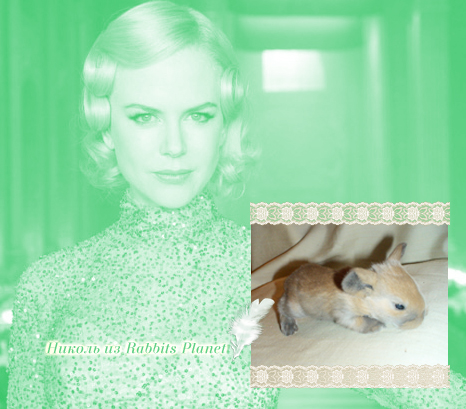 http://rabbits.ucoz.com/_ph/2/2/734500452.jpg
