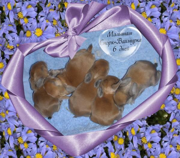 http://rabbits.ucoz.com/_ph/2/2/739173855.jpg