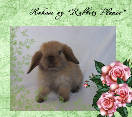 http://rabbits.ucoz.com/_ph/2/2/774815266.jpg