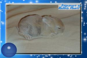 http://rabbits.ucoz.com/_ph/2/2/77551026.jpg