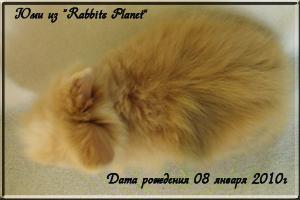 Юми из Rabbits Planet
