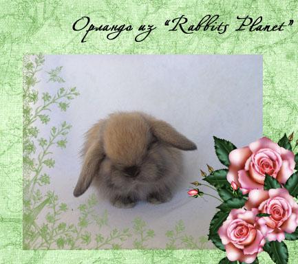 http://rabbits.ucoz.com/_ph/2/2/792319345.jpg