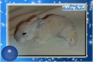 http://rabbits.ucoz.com/_ph/2/2/836502231.jpg