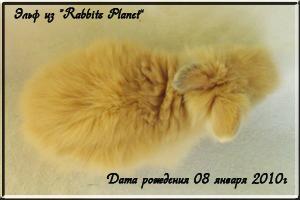 Эльф из Rabbits Planet