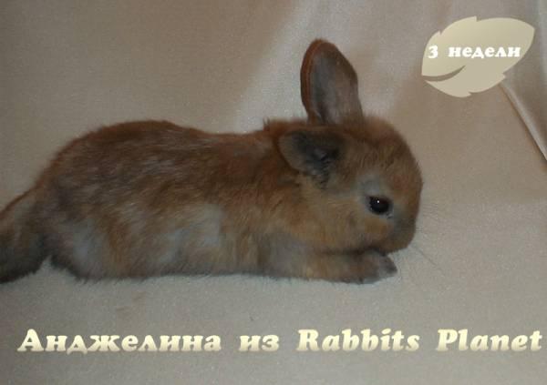 http://rabbits.ucoz.com/_ph/2/2/995419137.jpg