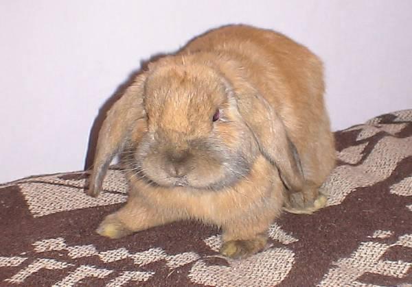 http://rabbits.ucoz.com/_ph/20/2/598162421.jpg