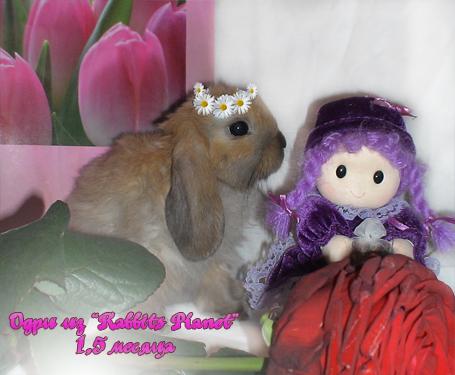 http://rabbits.ucoz.com/_ph/23/2/163953716.jpg