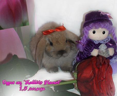 http://rabbits.ucoz.com/_ph/23/2/280016873.jpg