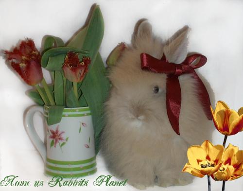 http://rabbits.ucoz.com/_ph/24/2/523162926.jpg