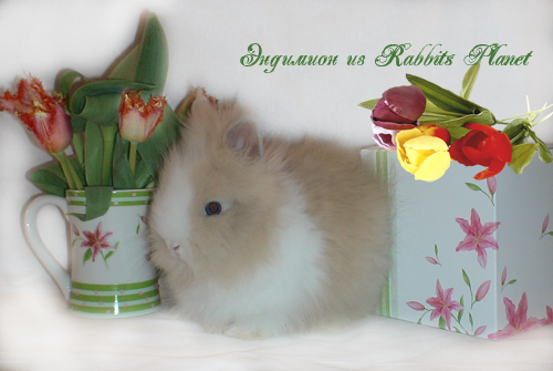 http://rabbits.ucoz.com/_ph/24/2/608409642.jpg
