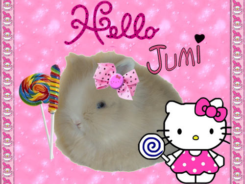 http://rabbits.ucoz.com/_ph/8/2/716538935.jpg