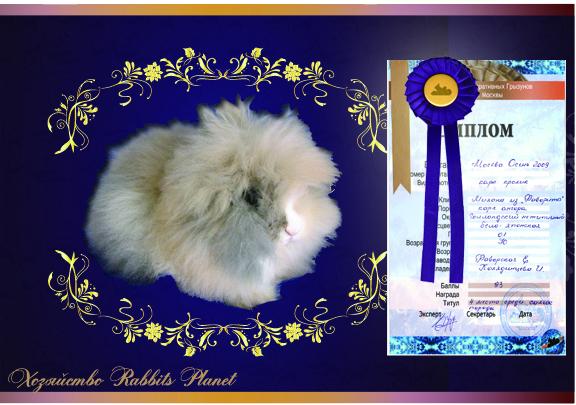 http://rabbits.ucoz.com/fotki/milanaZL.jpg